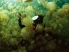 Сред медузите