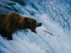 Риболов на сьомга, водопад Брукс, Национален парк Катмай, Аляска, 1999г